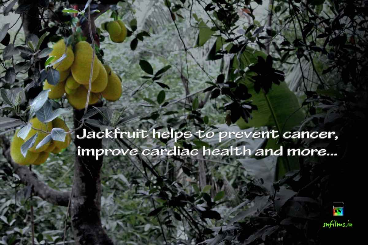 jackfruit prevents cancer, improves cardiaovascular health
