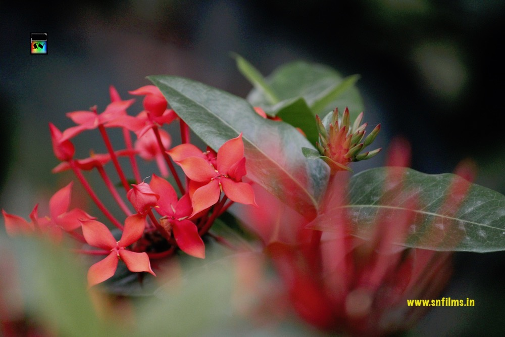 red flowers - love respect and romance - photography - sn films