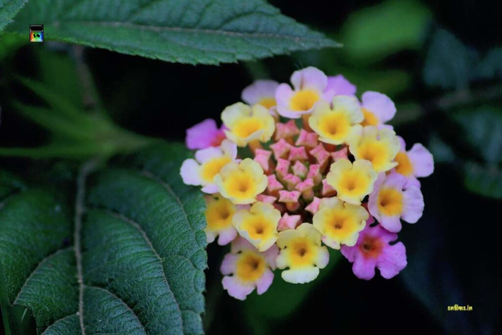 Yellow pink untamed roadside flowers - nature photography by Sanjib Nath